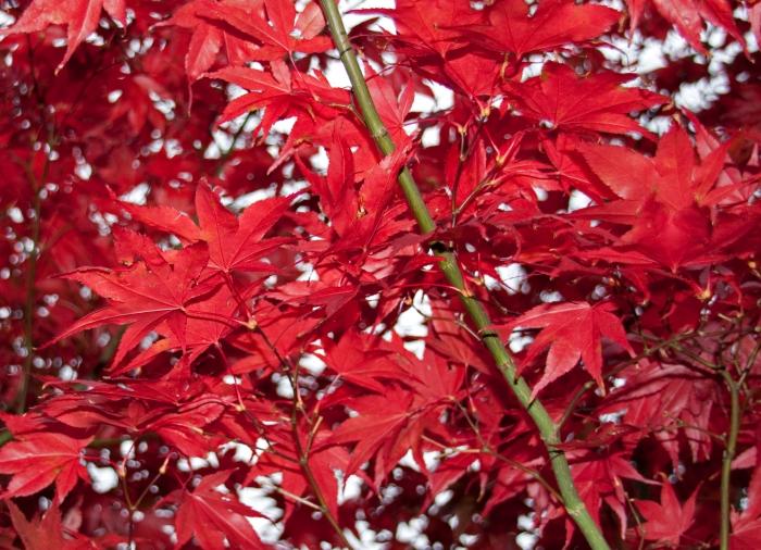 autumn_leaves_4059302564